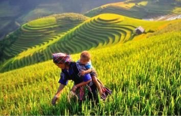 Esencia del norte de Vietnam 8 días